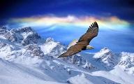 орёл 3