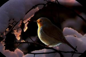 птичка и ветер